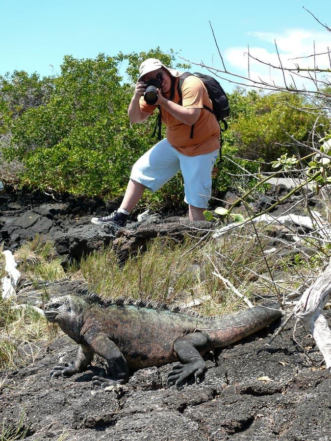 Un fotógrafo que toma una foto de una iguana marina imagen de archivo libre de regalías