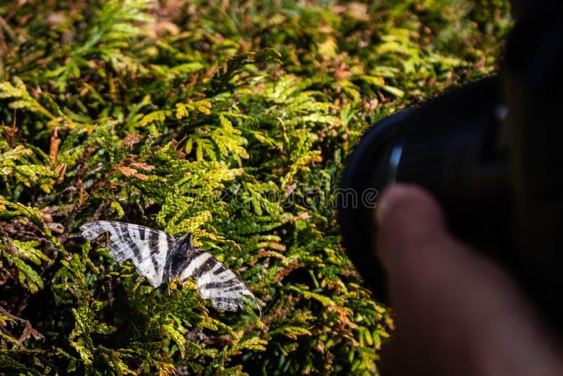 Un fotógrafo y una mariposa foto de archivo libre de regalías