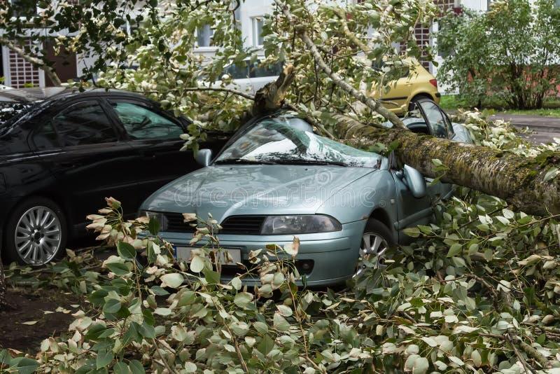Un fuerte viento rompió un árbol que cayó en un coche parqueado cerca imagen de archivo