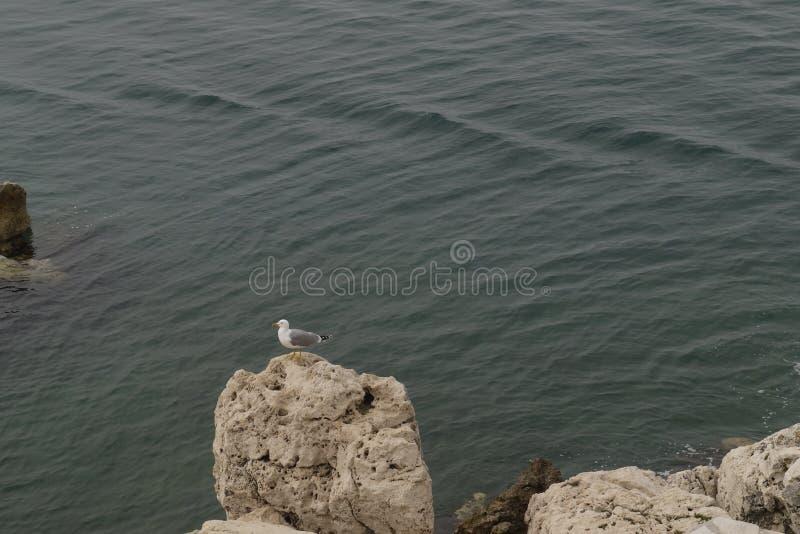 Un gabbiano che riposa sulla cima delle rocce del mare immagini stock