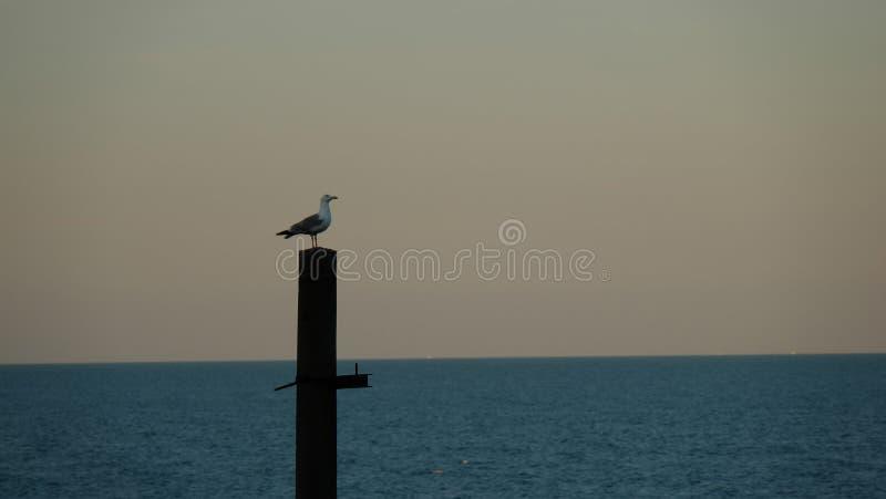 Un gabbiano che si siede su una colonna sui precedenti del mare e del cielo fotografie stock