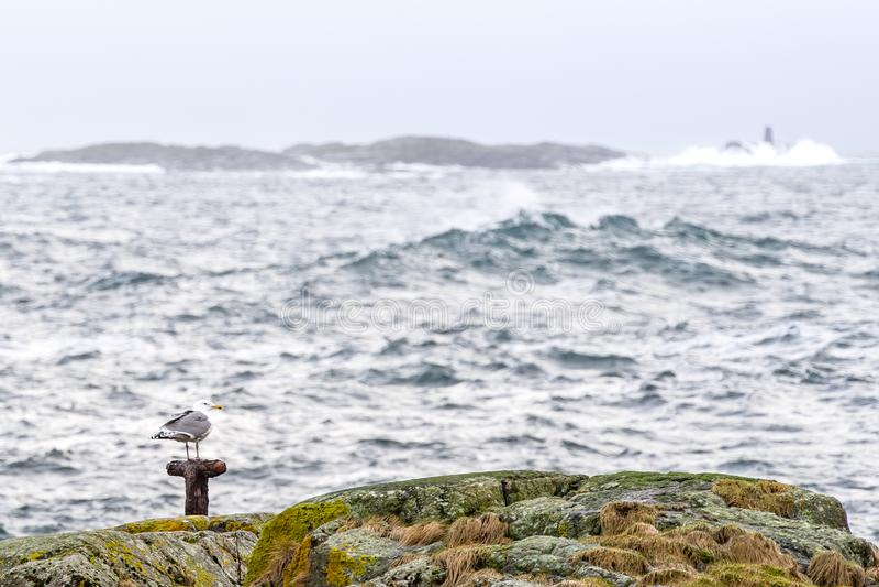 Un gabbiano di mare che sta tranquillamente su un palo su una piccola isola immagini stock libere da diritti