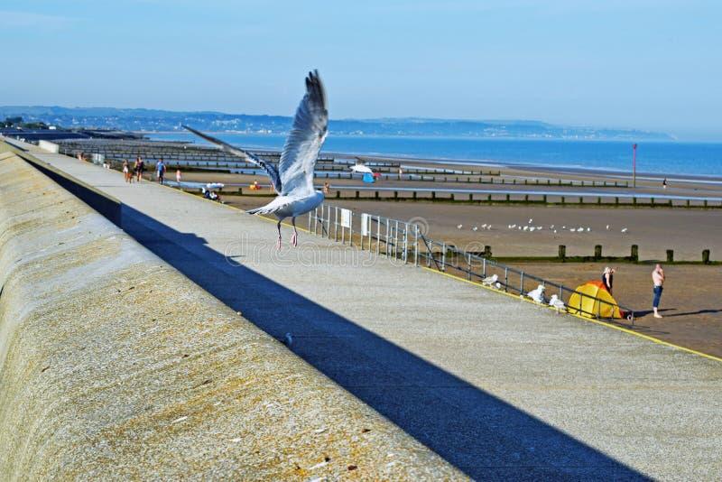 Un gabbiano di mare prende all'aria dalla diga immagine stock libera da diritti