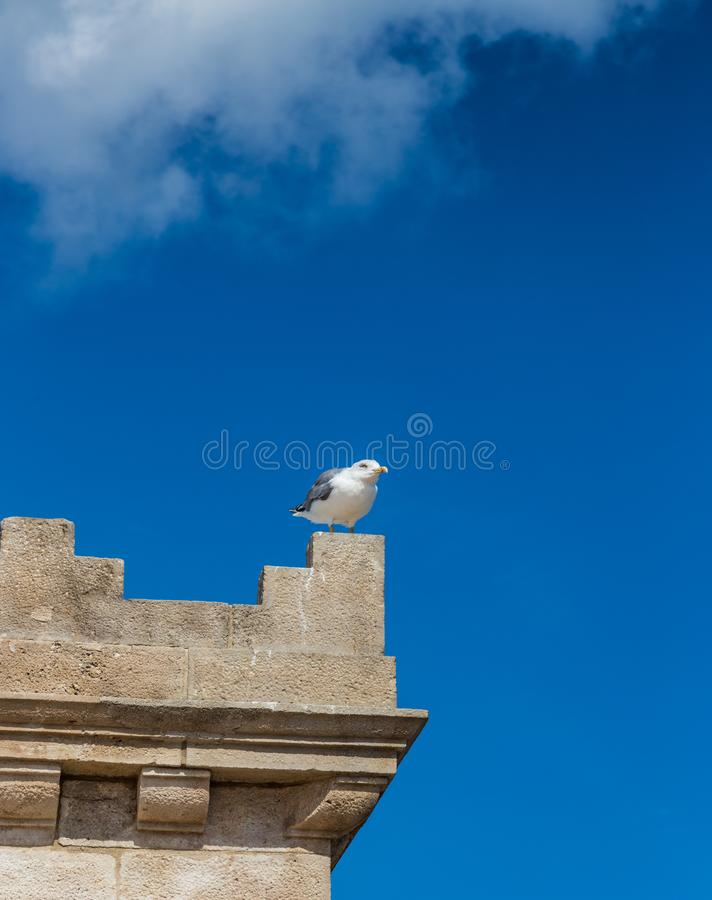 Un gabbiano si siede sull'orlo della torre contro il cielo a Barcellona, Spagna fotografie stock