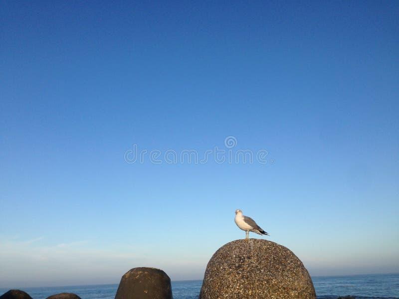 Un gabbiano sta sedendosi su una roccia immagini stock