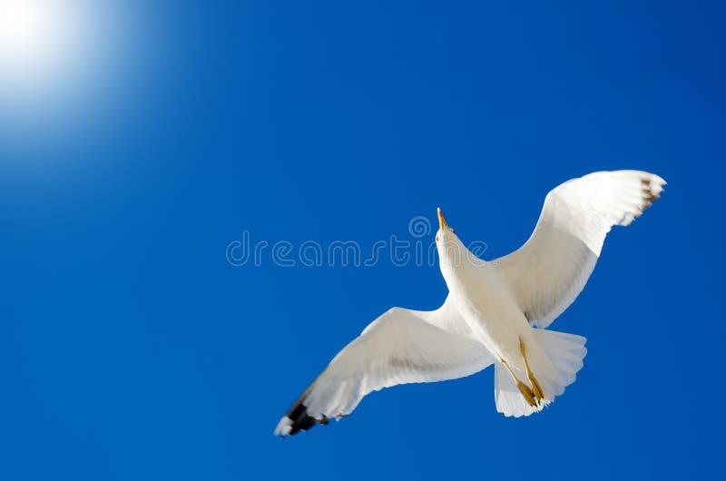 Un gabbiano sta volando nel cielo blu seabirds immagine stock