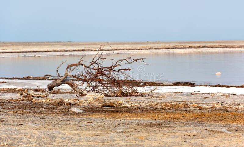 Un gancho en el dolor del mar muerto imagen de archivo