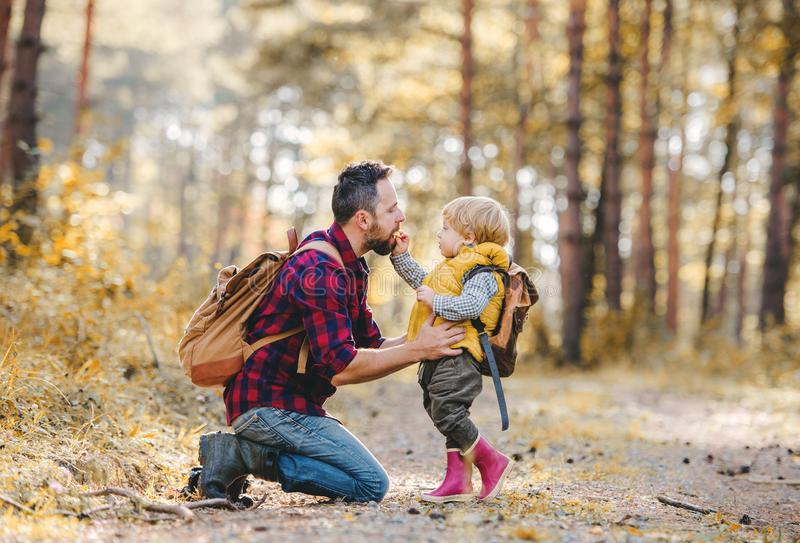 Un garçon d'enfant en bas âge donnant une pomme à son père dans une forêt d'automne images stock