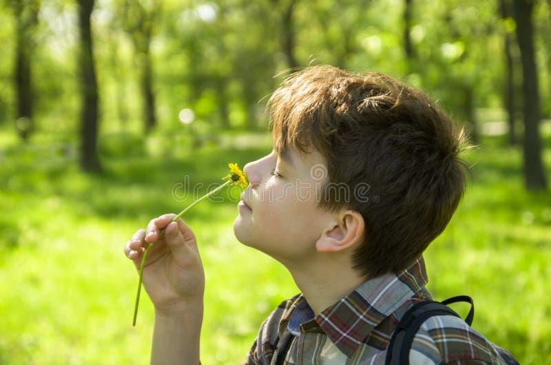 Un garçon en parc apprécie le parfum d'une fleur, un portrait en gros plan, dans le profil Concept gratuit d'allergie, dehors photographie stock libre de droits