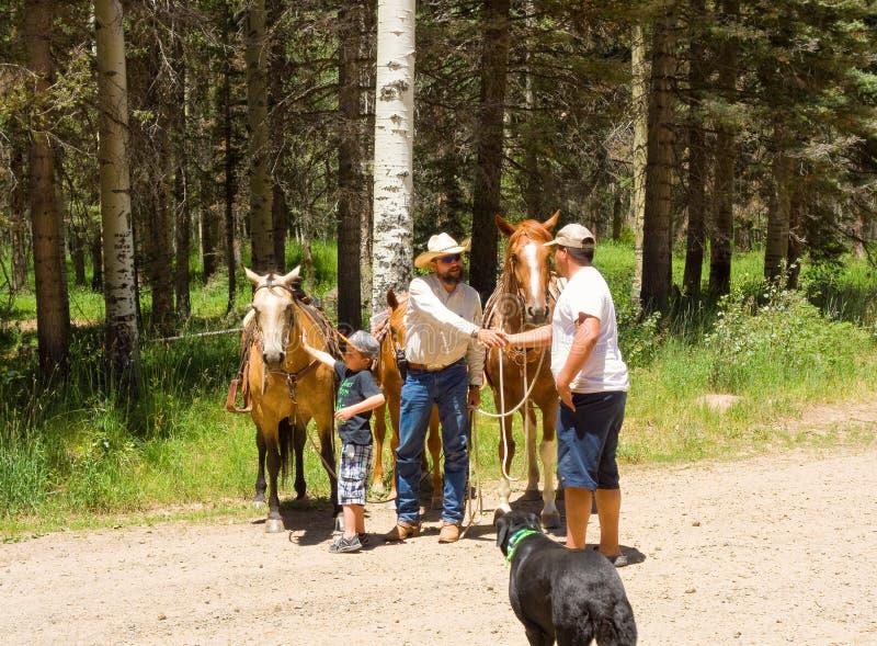 Un garçon rencontrant son premier cheval image stock