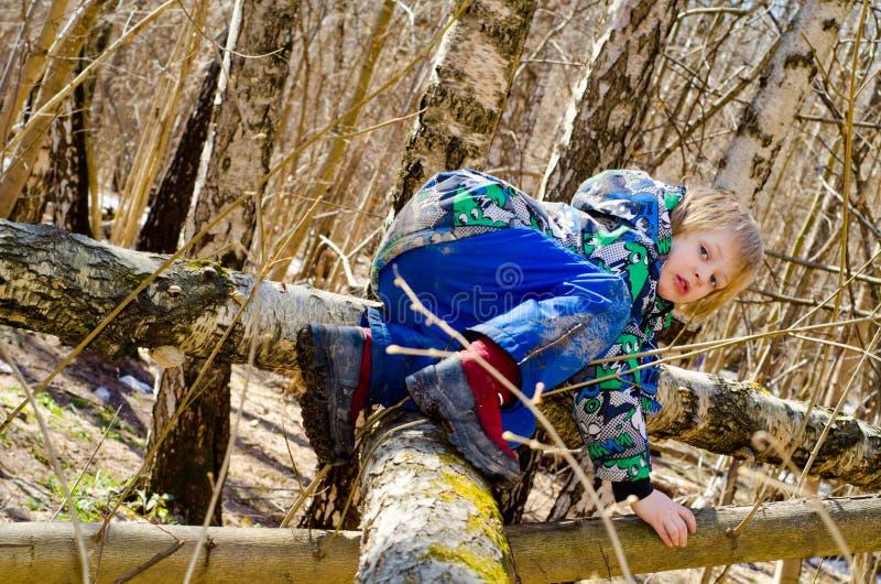 Un garçon s'élève sur un arbre photographie stock libre de droits