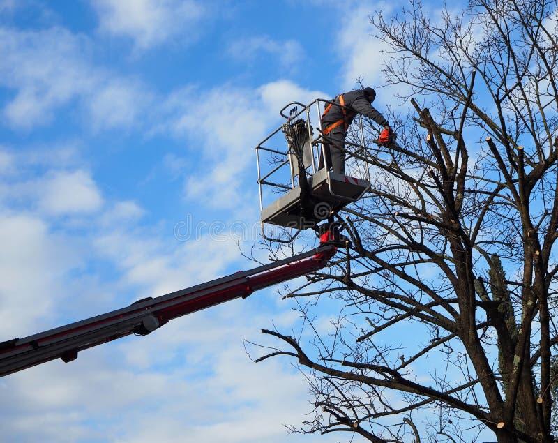Un gardner avec une tronçonneuse taille les arbres d'une plate-forme aérienne Ciel bleu et nuageux sur le fond photographie stock libre de droits