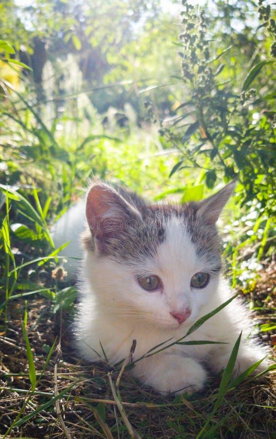 Un gatito adorable tendido sobre hierba fotos de archivo libres de regalías