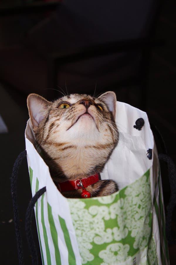 Un gatito lindo del gato atigrado en un bolso del regalo del Libro Blanco verde y imagenes de archivo