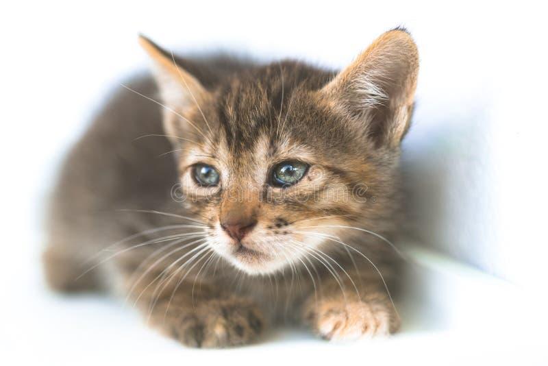 Un gatito muy triste imagenes de archivo