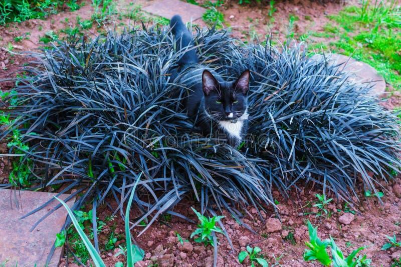 Un gatito negro hermoso que oculta en un macizo de flores decorativo en el jardín foto de archivo libre de regalías