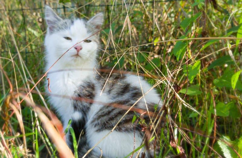 Un gatito orgulloso de su hierba fotografía de archivo libre de regalías