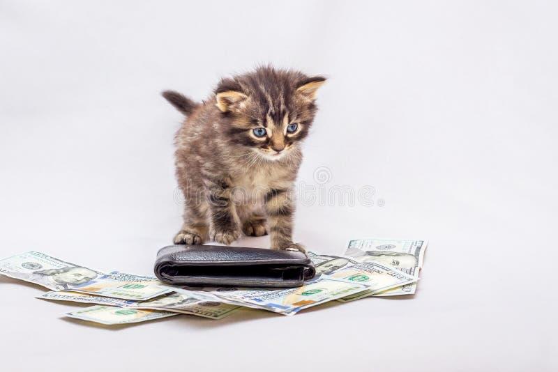 Un gatito se coloca al lado de un montón de dólares y de un monedero Negocios imagen de archivo