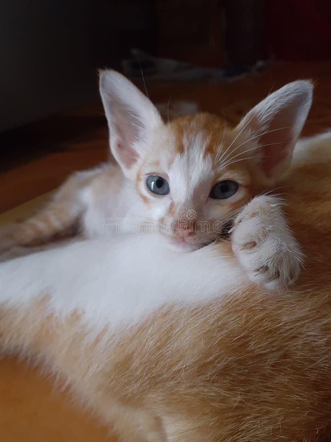 Un gatito y su mamá imagen de archivo