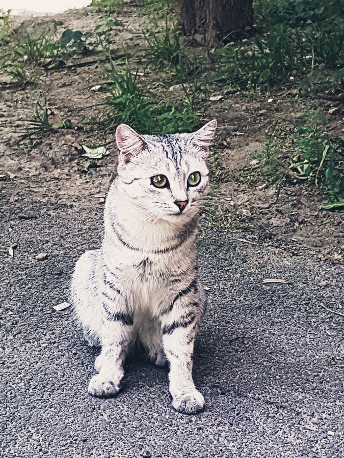 Un gato único fotografía de archivo
