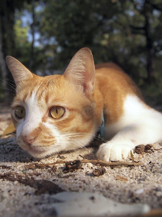 Un gato anaranjado en el bosque fotografía de archivo