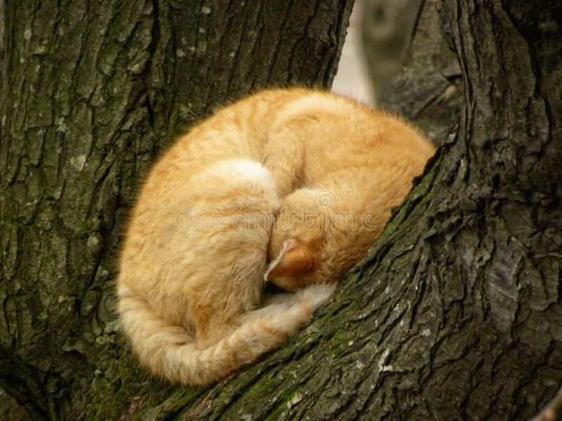 Un gato anaranjado que duerme a fondo fotografía de archivo libre de regalías
