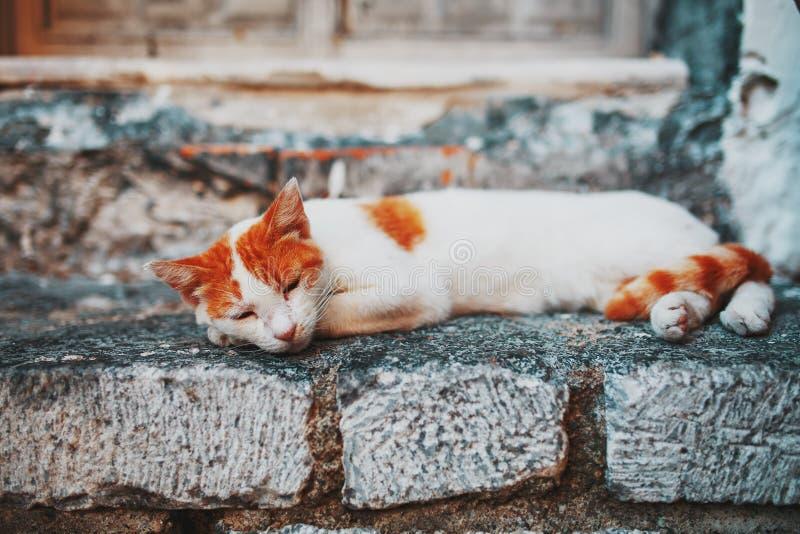 Un gato blanco con manchas anaranjadas duerme en el umbral de piedra de una casa antigua imagen de archivo
