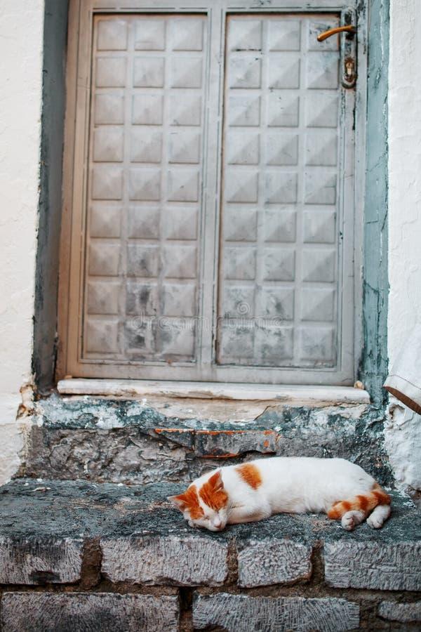 Un gato blanco con manchas anaranjadas duerme en el umbral de piedra de una casa antigua fotos de archivo