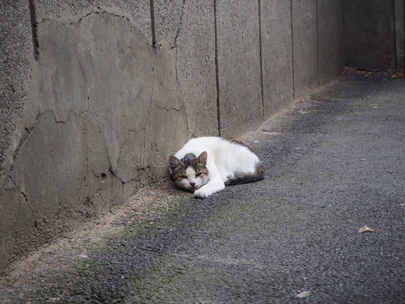 Un gato blanco sin hogar está mintiendo en la calle imagen de archivo libre de regalías