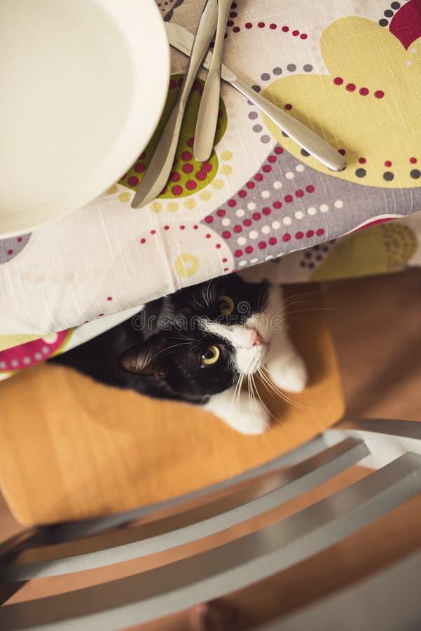 Un gato blanco y negro que oculta debajo de la tabla imagen de archivo libre de regalías