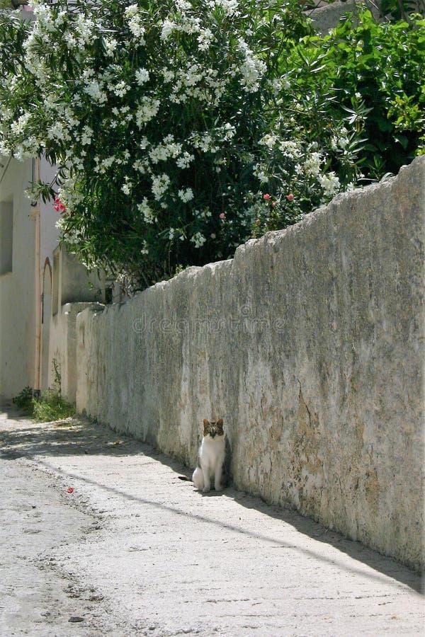 Un gato blanco y negro que se sienta en la calle en Grecia fotos de archivo libres de regalías