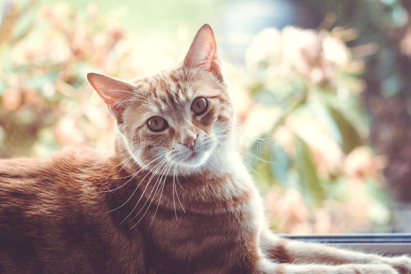 Un gato bonito del jengibre que se sienta delante de una ventana imágenes de archivo libres de regalías