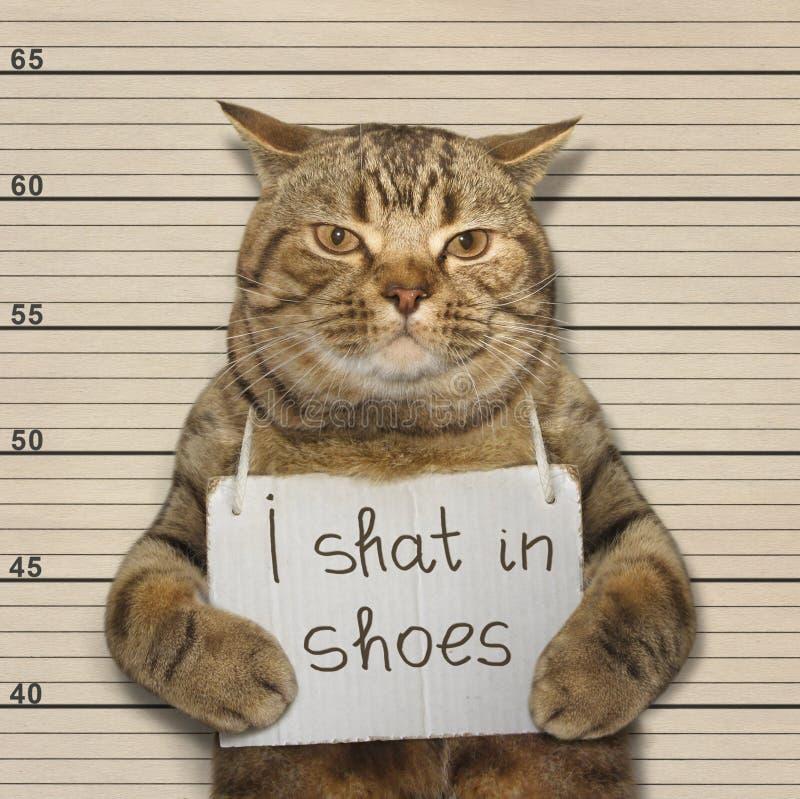 Un gato cagó en zapatos imágenes de archivo libres de regalías