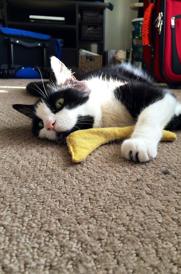 Un gato cansado y feliz imagen de archivo libre de regalías