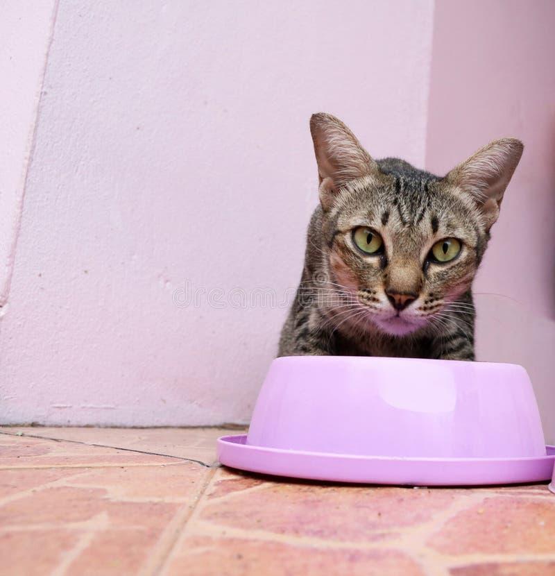 Un gato come la comida del cuenco de alimentación rosado imágenes de archivo libres de regalías
