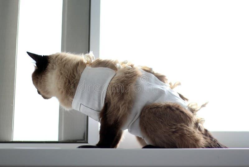 Un gato con la enfermedad del cáncer se está sentando en la manta médica foto de archivo libre de regalías