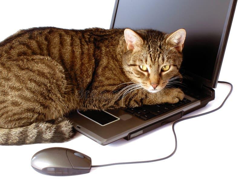 Un gato con una computadora portátil foto de archivo