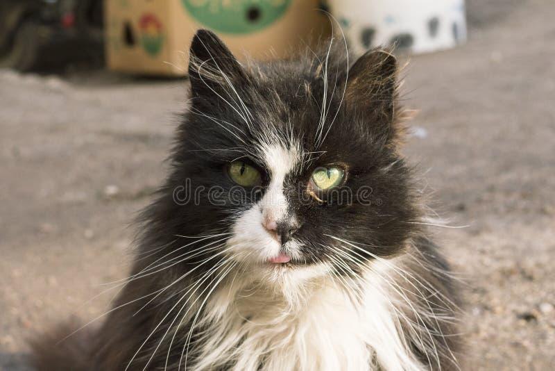 Un gato de la calle cerca del cubo de la basura fotografía de archivo libre de regalías