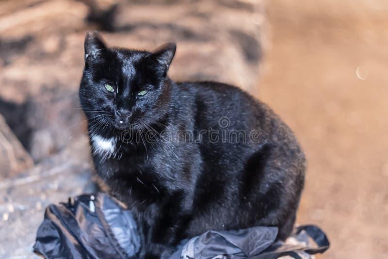 Un gato de mirada extraño que se sienta en mi bolso y que mira mi cámara fotografía de archivo libre de regalías