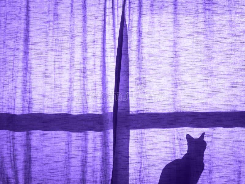 Un gato detrás de la puesta del sol de la cortina fotos de archivo
