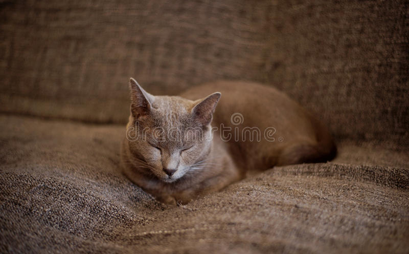 Un gato el dormir imagen de archivo libre de regalías