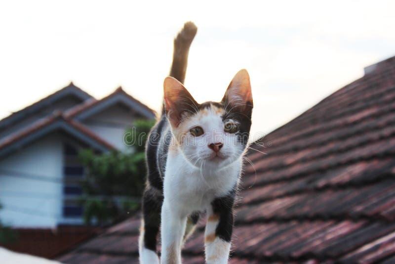 Un gato en el top del tejado fotografía de archivo libre de regalías