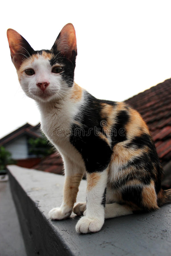 Un gato en el top del tejado fotografía de archivo