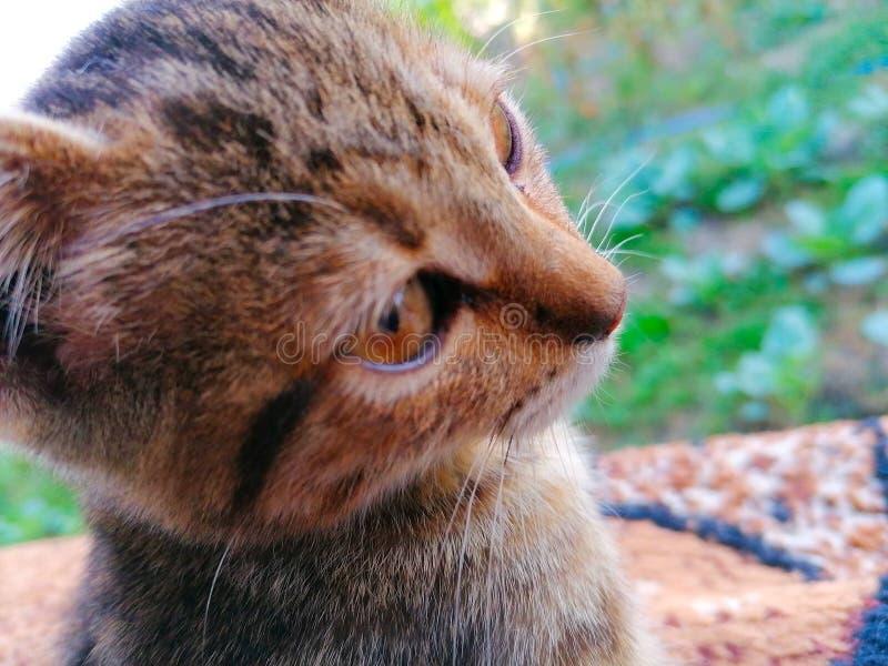 Un gato encantador imagen de archivo