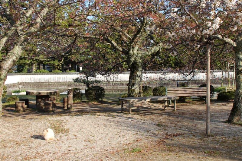 Un gato está descansando debajo de las flores de cerezo en un parque en Iwakuni (Japón) fotografía de archivo libre de regalías