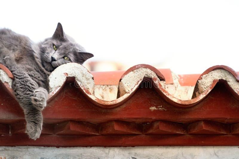 Un gato gris lindo que miente en un tejado con los ojos perezosos, Grecia imagen de archivo