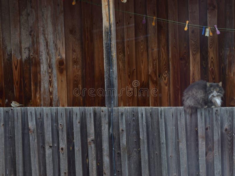 Un gato gris y un pequeño pájaro imagen de archivo libre de regalías