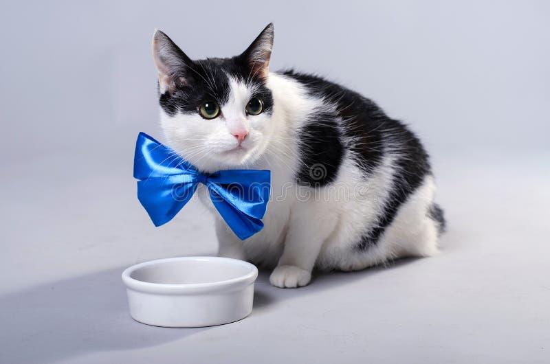 Un gato hermoso come de un cuenco, foto aislada fotografía de archivo libre de regalías