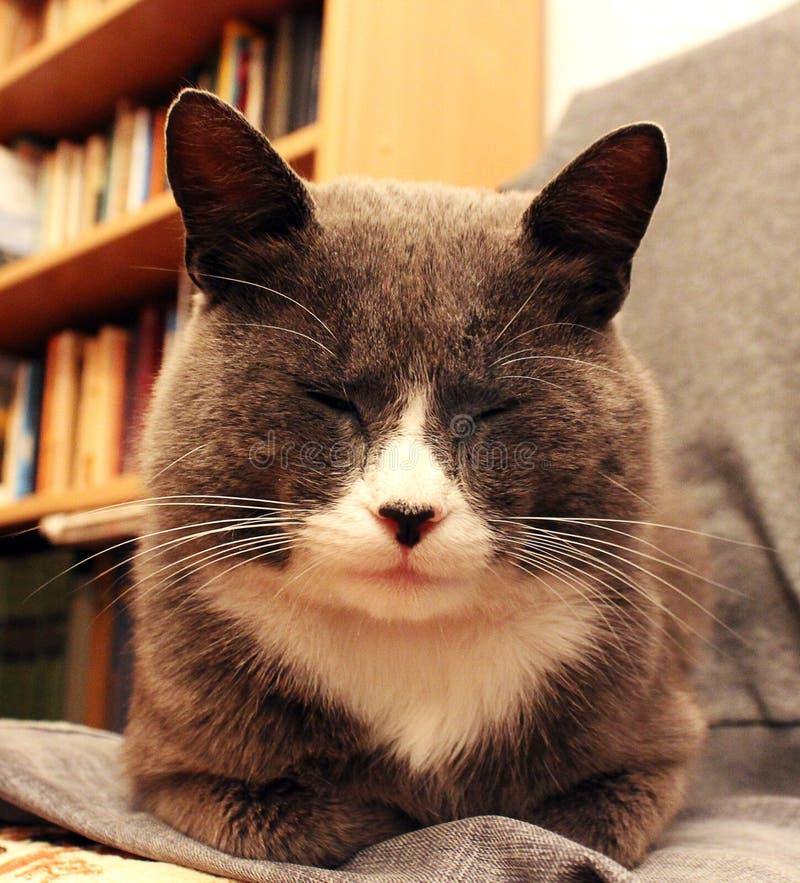 Un gato hermoso se sienta en la casa imagen de archivo libre de regalías