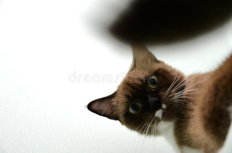 Un gato marrón con su cola borrosa imagen de archivo